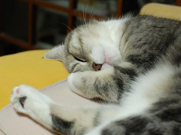 20140209まりん寝顔