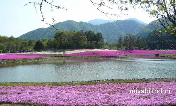 富士芝桜まつり 湖