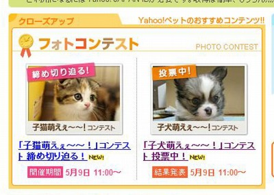 H24.05.02~メイ小犬コン表紙