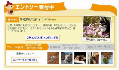 H24.10.24ニケ「秋の訪れ」コン表紙2