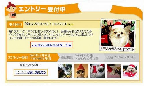 H24.11.21メイ「クリスマス」コン表紙1