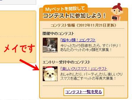 H24.11.21メイ「クリスマス」コン表紙2