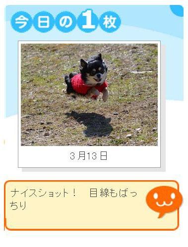 H250313今日の1枚ニケ!