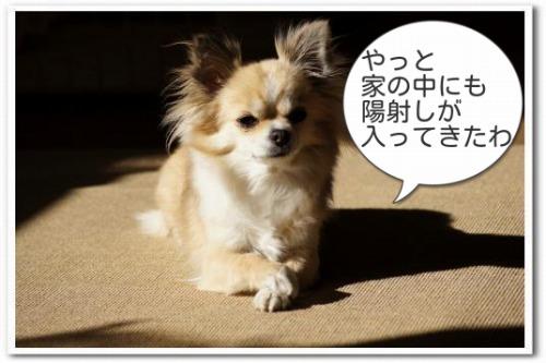 hizashi1.jpg