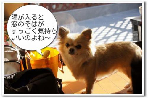 hizashi2.jpg