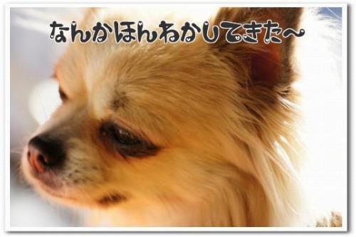 hizashi3.jpg