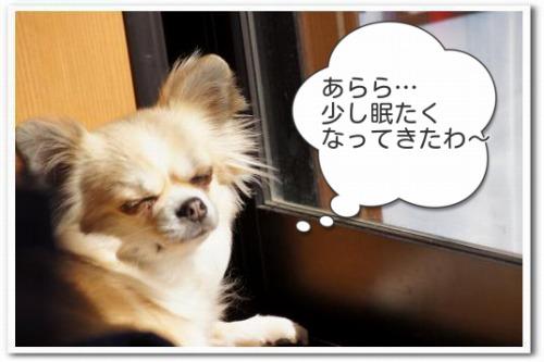 hizashi4.jpg