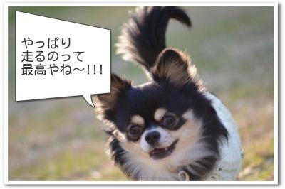 nenga4.jpg