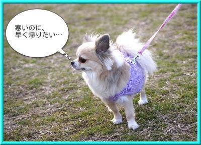 shirasagi2.jpg