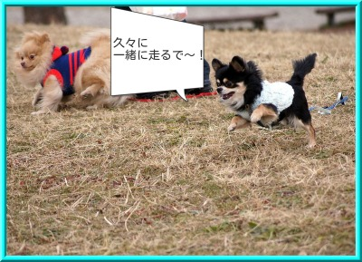 shirasagi3.jpg