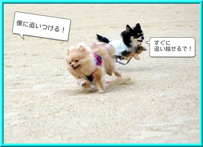 shirasagi4.jpg