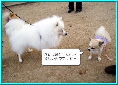 shirasagi5.jpg