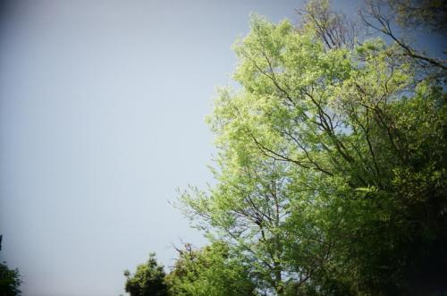 やさしい木