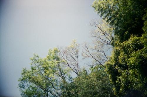 やさしい木々
