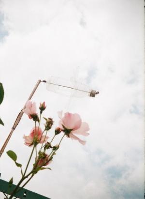 薄ピンクのバラとペットボトル風車