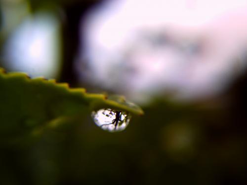 水玉の中の木