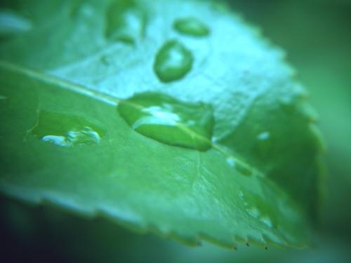 葉っぱと水玉