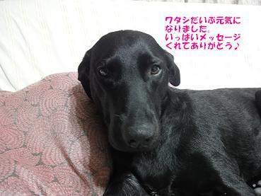 コピー ~ DSC07233