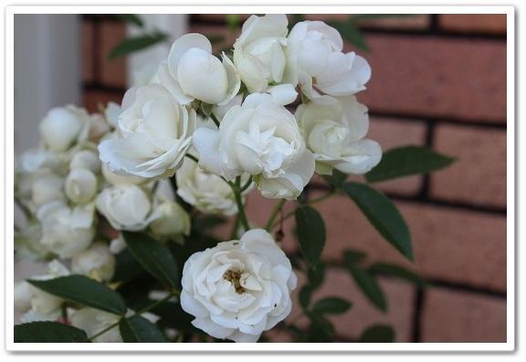 s-0518ホワイトマザーズデイIMG_1336