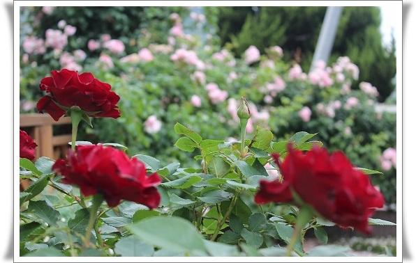 s-0604IMG_9630オマージュ