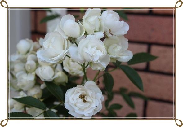 s-0618ホワイトマザーズデイIMG_1336