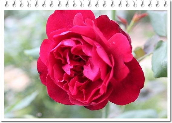 s-0619IMG_0553フランシスリュブリュイ