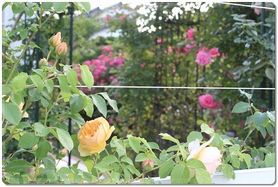 s-0518IMG_1370.jpg