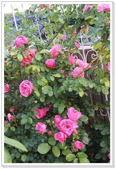 s-0529IMG_2643.jpg