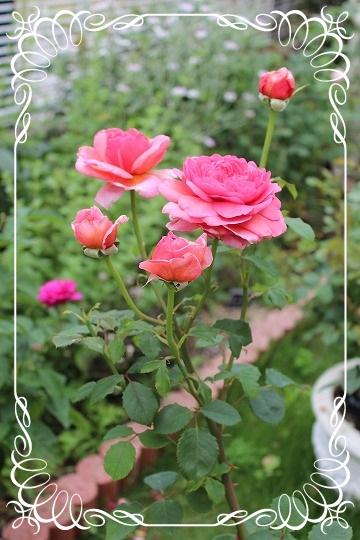 s-0611IMG_0052.jpg