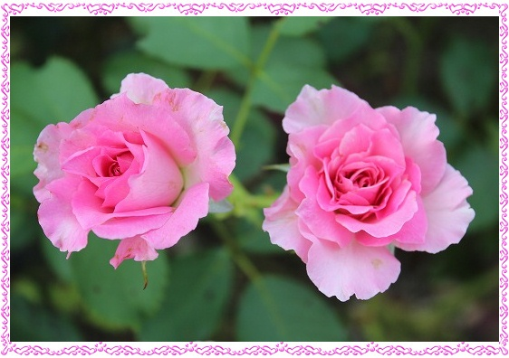 s-0728IMG_9899.jpg