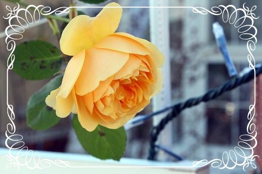 s-120620111204IMG_9437.jpg