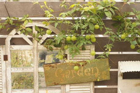 秋の庭 2012