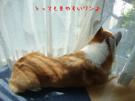 出窓で紋次郎