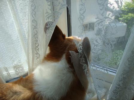 出窓で紋次郎2