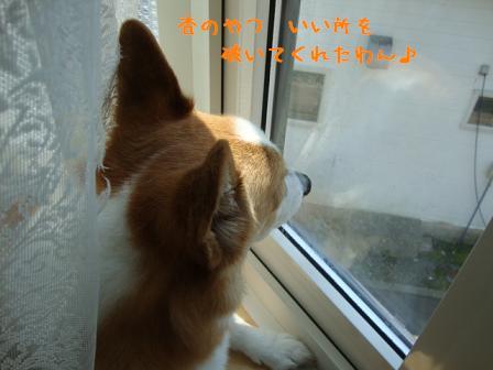 出窓で紋次郎3