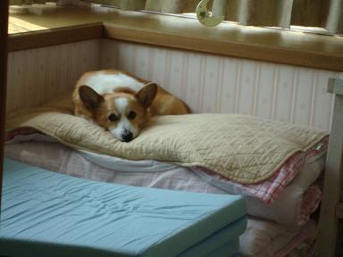 紋兄の寝床2