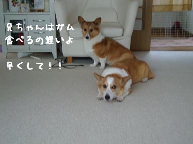 ガム食べ待ち杏
