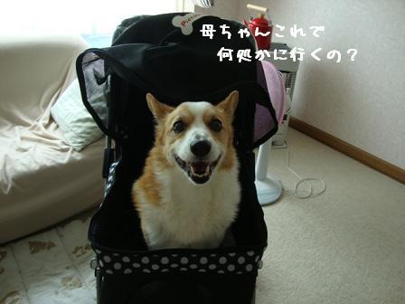ペットカート紋次郎