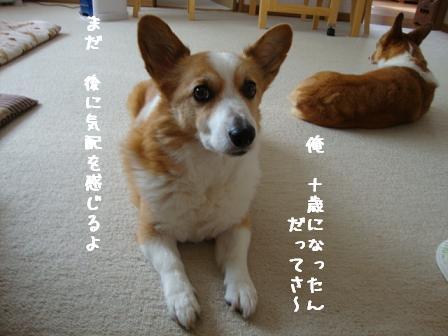紋兄&杏2