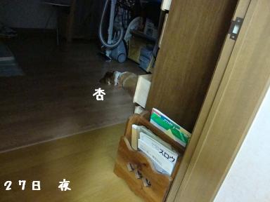 奥部屋で寝る杏