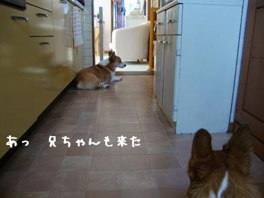 キッチンで紋兄&杏