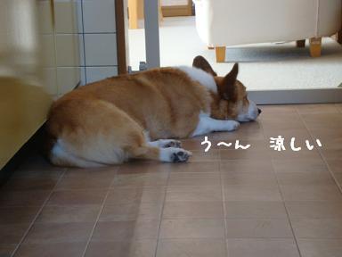 キッチンでお昼寝紋兄