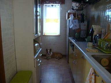 キッチン窓下 紋兄