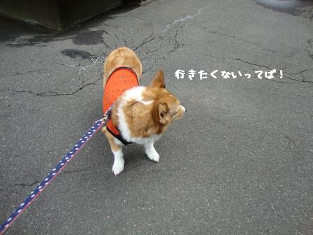 散歩拒否杏