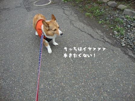 散歩拒否杏3