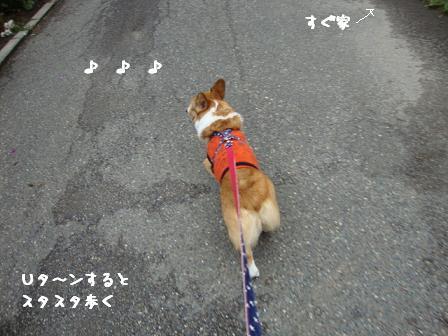 散歩拒否杏4