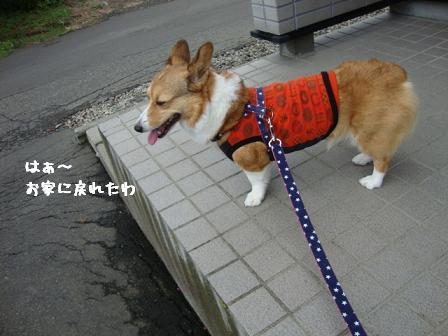 散歩拒否杏5
