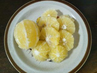 20121116_レモン酒3