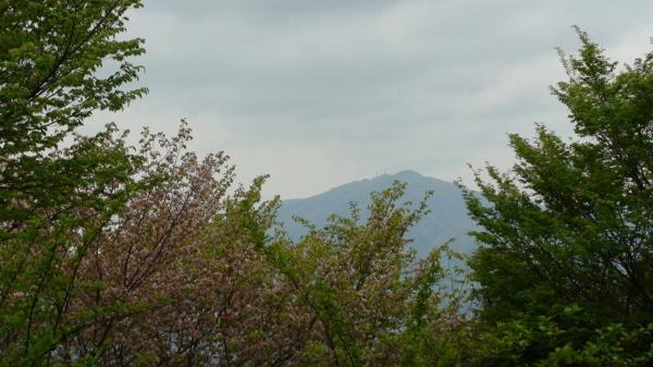 新緑 ヤマザクラ 加波山