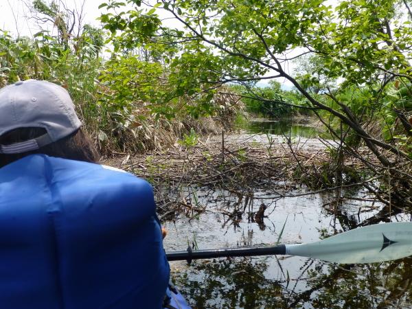 120616クッチャロ湖レカセウシュナイ川こりゃだめだ
